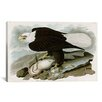 <strong>iCanvasArt</strong> 'White-Headed Eagle' by John James Audubon Painting Print on Canvas