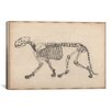 iCanvas Animal Art 'Tiger Skeleton Anatomy Drawing' Painting Print on Canvas