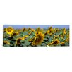 <strong>iCanvasArt</strong> Panoramic California, Central Valley, Field of Sunflowers Photographic Print on Canvas
