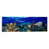 iCanvasArt Panoramic Stoplight Parrotfish with a Hawksbill Turtle Photographic Print on Canvas
