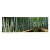 iCanvasArt Panoramic Stepped Walkway Passing Through a Bamboo Forest, Honshu, Japan Photographic Print on Canvas