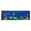 iCanvasArt Panoramic School of Fish Swimming in the Sea, Digital Composite Photographic Print on Canvas