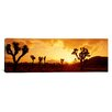 <strong>iCanvasArt</strong> Panoramic Sunset, Joshua Tree Park, California Photographic Print on Canvas