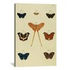 """iCanvas """"Supplement Plate 27"""" Canvas Wall Art by Cramer and Stoll"""