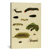 """iCanvas """"Supplement Plate 19"""" Canvas Wall Art by Cramer and Stoll"""