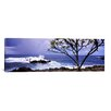 iCanvasArt Panoramic Tree on the Coast, Honolulu Nui Bay, Nahiku, Maui, Hawaii Photographic Print on Canvas