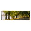 <strong>iCanvasArt</strong> Panoramic Trees Along a Road, Lake Washington Boulevard, Seattle, Washington State Photographic Print on Canvas