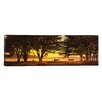 iCanvasArt Panoramic Trees in a Field, Crissy Field, San Francisco, California Photographic Print on Canvas