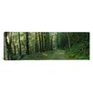 <strong>iCanvasArt</strong> Panoramic Trees in a National Park, Shenandoah National Park, Virginia Photographic Print on Canvas