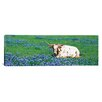 iCanvas Panoramic Texas Longhorn Cow Sitting on a Field, Hill County, Texas Photographic Print on Canvas