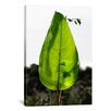 "iCanvasArt ""Single Leaf Beauty' by Harold Silverman - Foilage and Greenery Photographic Print on Canvas"