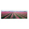 <strong>iCanvasArt</strong> Panoramic Tulip Fields, Washington State Photographic Print on Canvas
