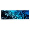 iCanvas Panoramic Silhouette of an Oak Tree, Oakland, California Photographic Print on Canvas