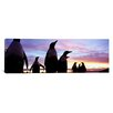 iCanvasArt Panoramic Group of Gentoo Penguins, Falkland Islands Photographic Print on Canvas