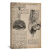 iCanvas 'Sketchbook Studies of Human Organs' by Leonardo da Vinci Painting Print on Canvas