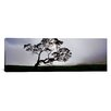 <strong>iCanvasArt</strong> Panoramic Mauna Kea, Kamuela, Big Island, Hawaii Photographic Print on Canvas