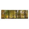 iCanvas Panoramic Trees Photographic Print on Canvas