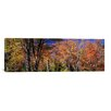 iCanvas Panoramic Trees in Autumn, Vermont Photographic Print on Canvas