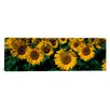 <strong>iCanvasArt</strong> Panoramic Sunflowers ND Photographic Print on Canvas