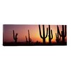 iCanvas Panoramic Saguaro National Park, Tucson, Pima County, Arizona Photographic Print on Canvas