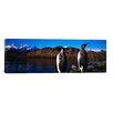 <strong>iCanvasArt</strong> Panoramic Two King Penguins on Shore of Cumberland Bay East Photographic Print on Canvas
