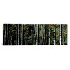 iCanvas Panoramic White Aspen Tree Trunks CO Photographic Print on Canvas