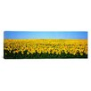 iCanvas Panoramic Sunflower Field, North Dakota Photographic Print on Canvas