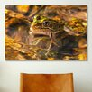 iCanvas 'Frog' by Gordon Semmens Photographic Print on Canvas