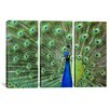 iCanvasArt Photography Peacock Feathers 3 Piece on Canvas Set
