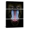 iCanvas Photography SD Smart Mandrill 3 Piece on Canvas