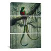 iCanvas Harro Maass Resplendent Quetzal 2 3 Piece on Canvas Set