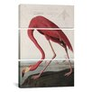 iCanvas John James Audubon Flamingo Drinking At Water's Edge 3 Piece on Canvas Set
