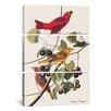 iCanvas John James Audubon Summer Tanager 3 Piece on Canvas Set