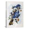 iCanvas John James Audubon Blue Jay 3 Piece on Canvas Set