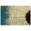 Epic Art 'Dandelion with Blue' by Sharon Johnstone Photographic Print on Canvas