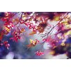<strong>'Autumn' by Silvia Cook Photographic Print on Canvas</strong> by Epic Art