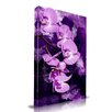 <strong>Orchid Graphic Art on Canvas</strong> by Maxwell Dickson