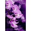 Maxwell Dickson Orchid Graphic Art on Canvas