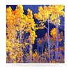KESS InHouse Aspen Trees by Maynard Logan Photographic Print Plaque