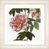 Studio Works Modern Vintage Botanical No. 49W by Zhee Singer Framed Giclee Print Fine Wall Art