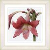 Studio Works Modern Vintage Botanical No. 01W by Zhee Singer Framed Giclee Print Fine Wall Art