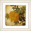 Studio Works Modern Vintage Botanical No. 44A by Zhee Singer Framed Giclee Print Fine Wall Art