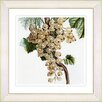 Studio Works Modern Vintage Botanical No. 09W by Zhee Singer Framed Giclee Print Fine Wall Art