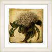 Studio Works Modern Vintage Botanical No. 37A  by Zhee Singer Framed Giclee Print Fine Wall Art