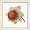 Studio Works Modern Vintage Botanical No. 20cW  by Zhee Singer Framed Giclee Print Fine Wall Art