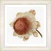 Studio Works Modern Vintage Botanical No. 20cW  by Zhee Singer Framed Giclee Print Fine Wall Art
