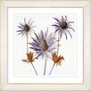 Studio Works Modern Vintage Botanical No. 55W by Zhee Singer Framed Giclee Print Fine Wall Art