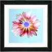 "Studio Works Modern ""Sky Blue Snowflake Daisy"" by Zhee Singer Framed Graphic Art"