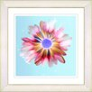 "<strong>Studio Works Modern</strong> ""Sky Blue Snowflake Daisy"" by Zhee Singer Framed Graphic Art"