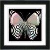 """Studio Works Modern """"White Zebra Butterfly"""" by Zhee Singer Framed Fine Art Giclee Painting Print"""